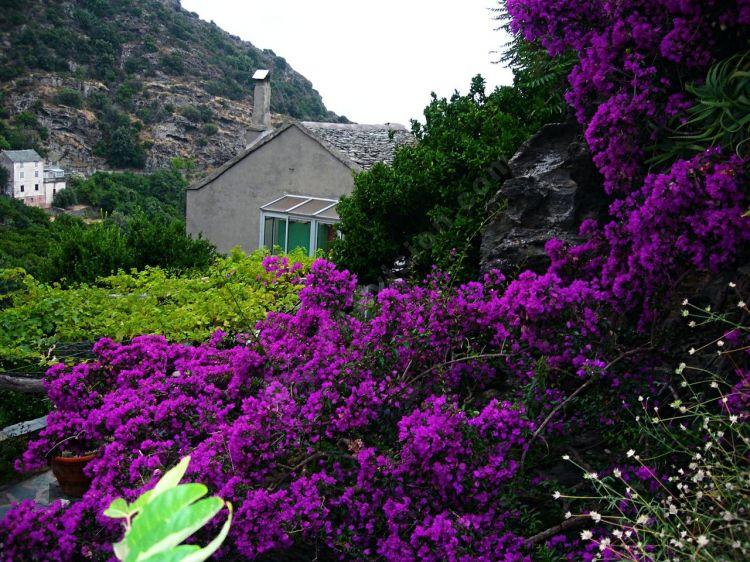 Photo Libre Magnifique Parterre De Fleurs Paysages Nature Et